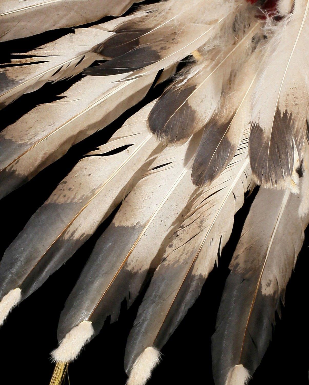 перья орла картинки дракона восемь